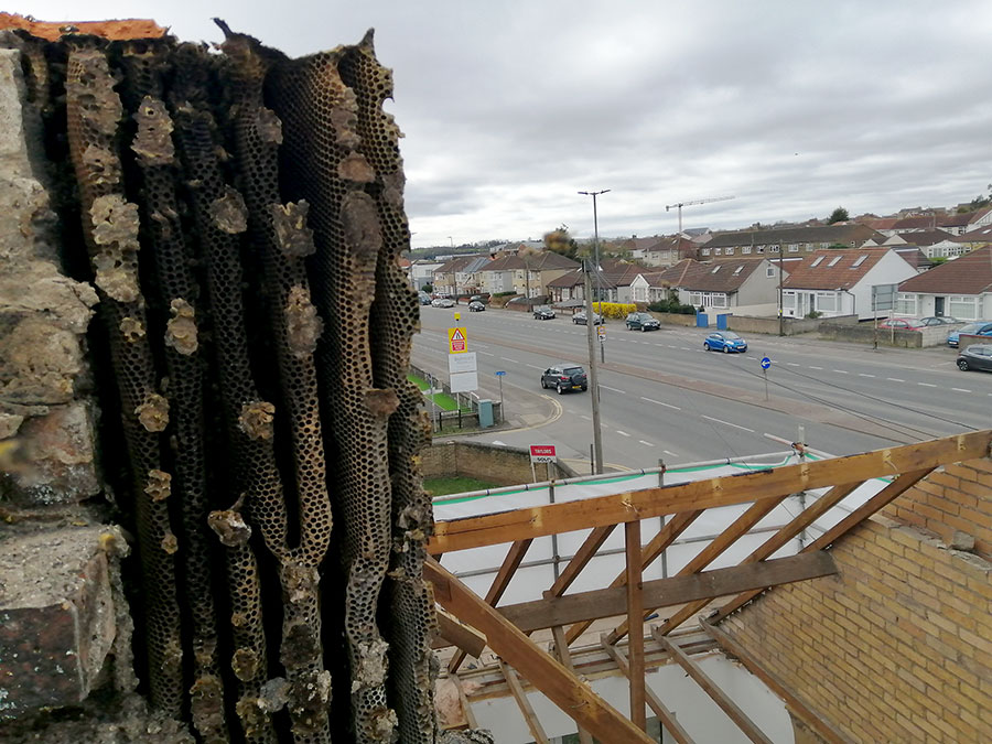 Photo of a bee nest in a partly dismantled chimney.